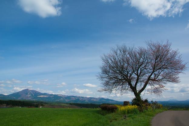 前原の一本桜♪