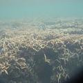 写真: 相方撮影の熱帯魚24