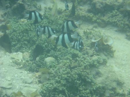 相方撮影の熱帯魚30