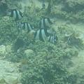 写真: 相方撮影の熱帯魚30