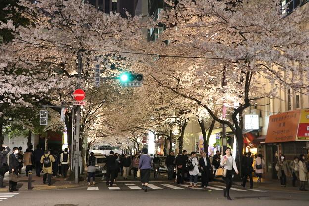 東京駅前の夜桜