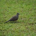 Photos: ホテルの庭に野鳥さん