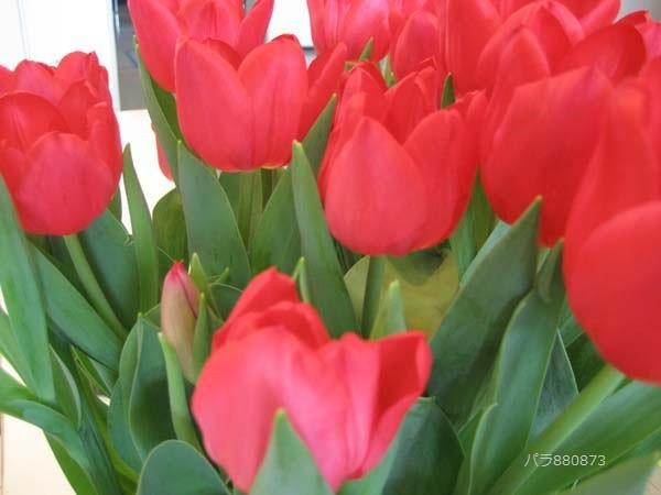 咲いた咲いた~~チューリップの花が♪