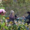 語らいの庭園