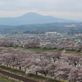 27.4.8一目千本桜