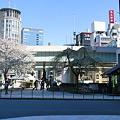 こっそりイケメン桜を激写!!もう咲き終わったみたい。。。
