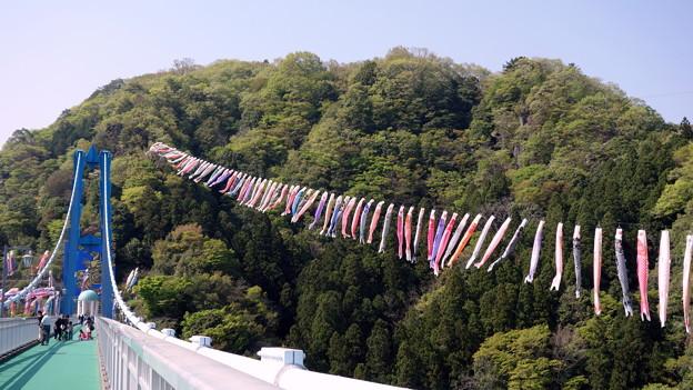 Ryujin Otsuri-bashi, Ibaraki - Children's Day Festival 竜神大吊橋・鯉のぼりまつり